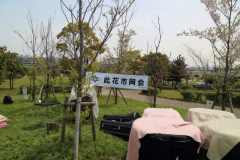 2015_hanami_06